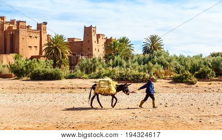 Ait Benhaddou Morocco - May 11 2017: Moroccan Berber man walking past the ancient village of Ait Benhaddou with his donkey loaded with hay.
