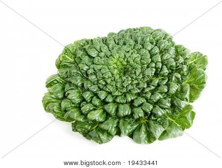 Fresh harvested Tah Tsai lettuce isolated on white. Tah Tsai or (Tatsoi) a commly used green leaf vegetable in Chinese and oriental dishes.