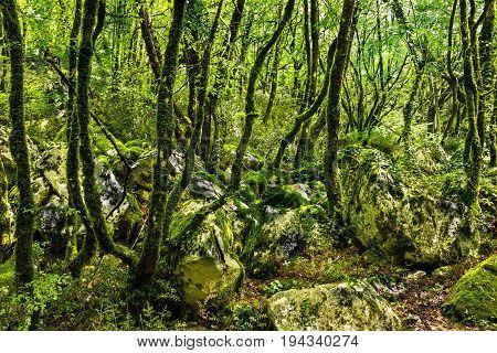 Green forest in summer, Montenegro, monastery Ostrog.