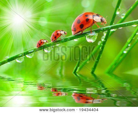 Three ladybugs running on a grass bridge over a rainy slop.