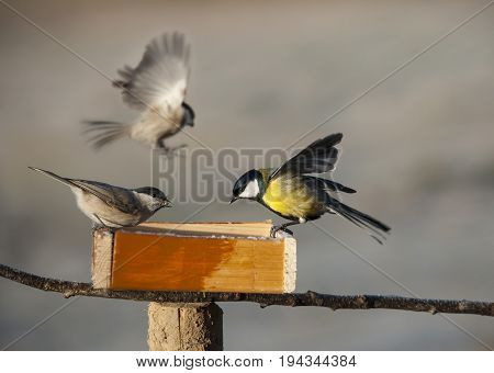 birds eating from bird feeder in winter