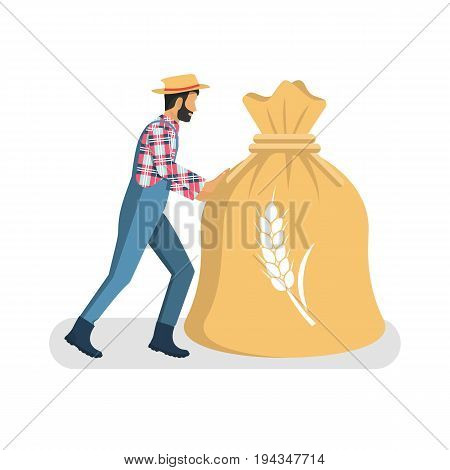 Male farmer in overalls boots, hat carry big bag of grain. Organic grain concept. Good grain harvest. Agriculture, harvesting. Vector illustration flat design. Isolated on white background. Wheat ear.