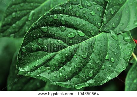 Rainstorm and rain drops on leaves and plants