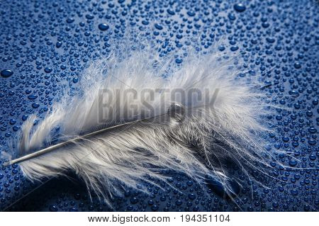 a white feather on a dewy background