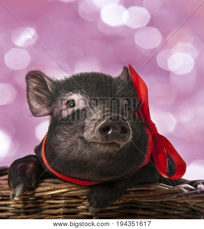 a cute little black pig sitting in a basket - pink background