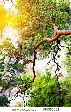 Nature background with mountain tree in sunlight