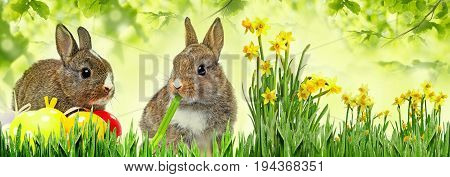 little rabbits and easter eggs close up