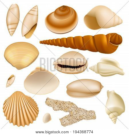 Realistic Seashell Collection Isolated on White Background. Set of Clam Mollusc Shells Top View. 3d Sea Shells Illustration
