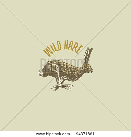 wild hare or rabbit engraved hand drawn in old sketch style, vintage animals. logo or emblems, retro label and badge