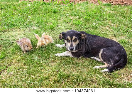 two rabbits and dog are lying on the grass