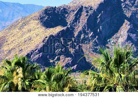 Palm Trees with barren rugged mountains beyond including shadows taken in Palm Springs, CA