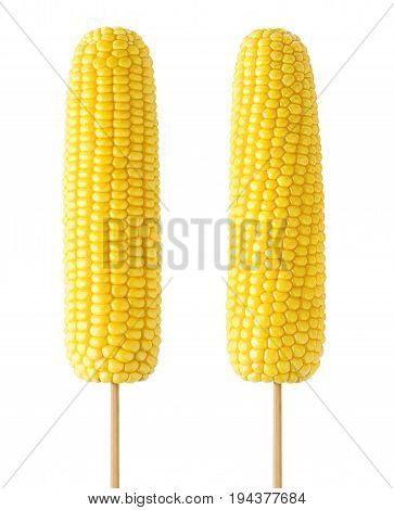 Isolated corns. Two cooked sweet corns on wooden sticks isolated on white background with clipping path