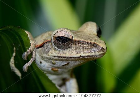 Close up image of a tree frog hiding in the gardens.