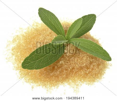 a stevia rebaudiana with a sugar close up