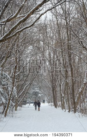 People walking in Beltline Trail. The Beltline Trail is a 9 km cycling and walking trail in Toronto Ontario Canada. Winter time