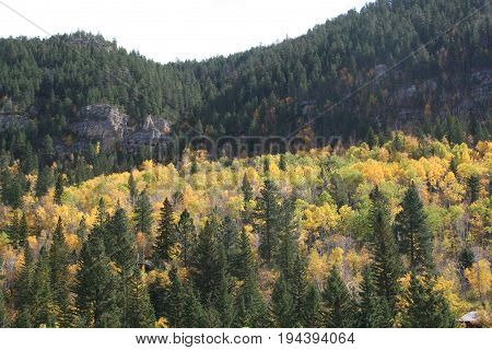 The view of fall colors in Spearfish canyon  South Dakota  2016.