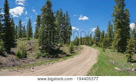 Road Through Wyoming Pine Woods