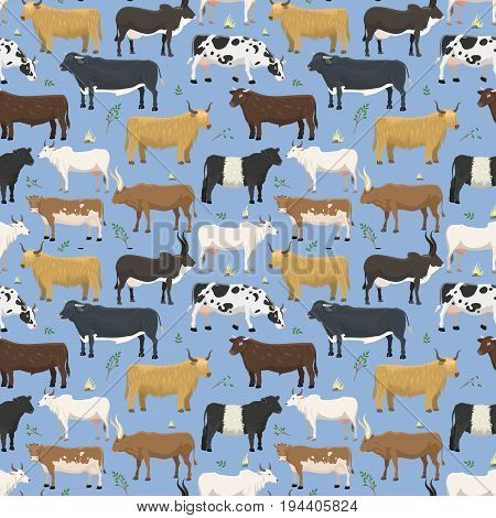 Set of bulls and cows farm animal cattle vector illustration design seamless pattern background