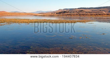Aquatic Grass And Vegetation In The Yellowstone River In The Hayden Valley In Yellowstone National P