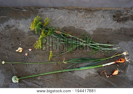 Onions and garlic of local varieties grown on an ecological farm using natural organic fertilizers from cow and chicken manure