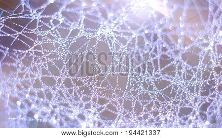 Close up of spider net with water drops. Macro dew drops on spider web.