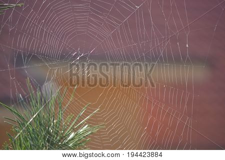 Spiderweb always brings a little strange feeling and admiration for the creator