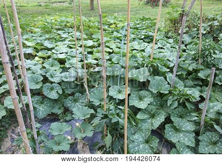 Vegetable Garden With The Cultivation Of Vegetables And Fruit Pl