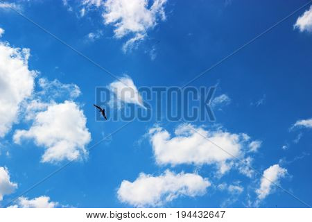 The Eagle Soars In The Sky And Clouds Background