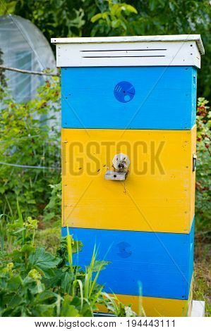 Beautiful bees hive with yellow-blue paint. Bees bring pollen to the hive