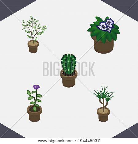 Isometric Houseplant Set Of Flower, Houseplant, Peyote And Other Vector Objects. Also Includes Cactus, Botany, Plant Elements.