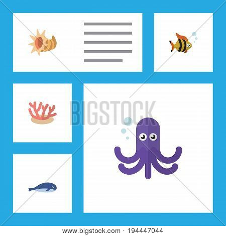 Flat Icon Marine Set Of Seashell, Algae, Tentacle And Other Vector Objects. Also Includes Octopus, Seaweed, Seashell Elements.