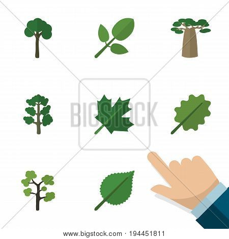 Flat Icon Natural Set Of Oaken, Linden, Alder And Other Vector Objects. Also Includes Leaf, Park, Hickory Elements.