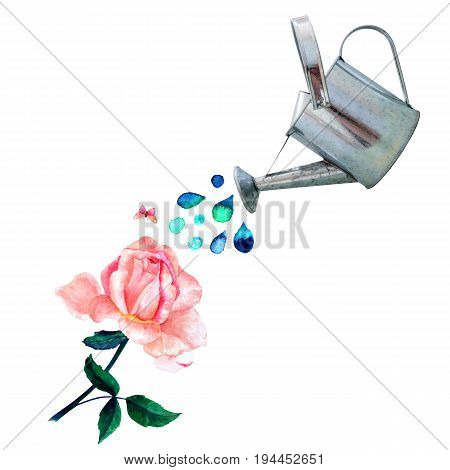 A collage of watercolor drawings and a photo cutout. A watering can pouring water over a vintage style pastel pink rose, with a little butterfly, and a place for text, on white
