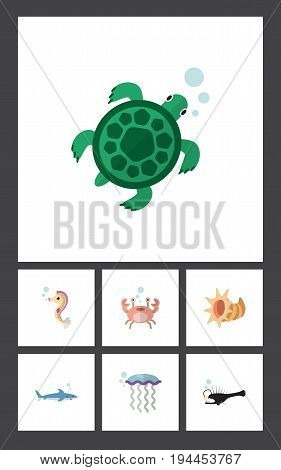 Flat Icon Nature Set Of Cancer, Fish, Hippocampus And Other Vector Objects. Also Includes Gray, Scallop, Medusa Elements.