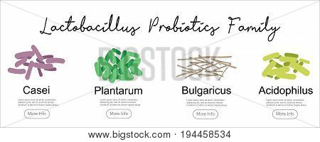 Probiotics Lactobacillus family, vector illustration. Good bacteria microorganism isolated on white background. Probiotics vector concept.