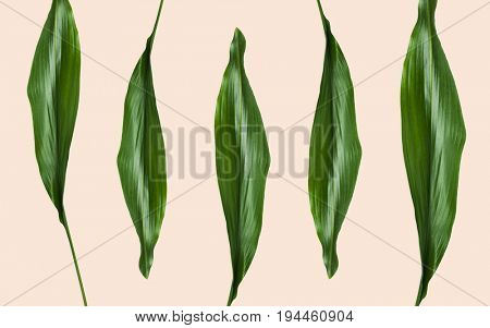 nature, organic and botany concept - green leaves on beige background