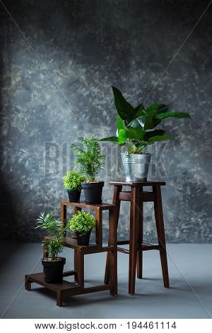Green plants in pot decorating a room with loft wooden interior and big window
