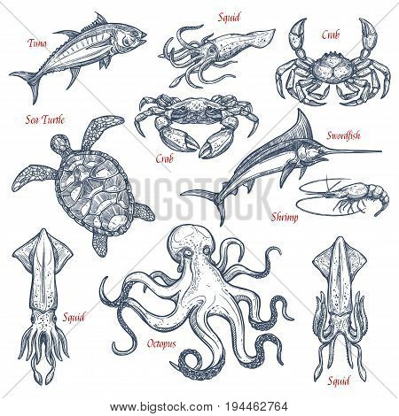 Sea animal sketch set with seafood and fish. Tuna, crab, octopus, shrimp, swordfish, squid and sea turtle isolated symbol for underwater wildlife, sea fishing, seafood and fish market design