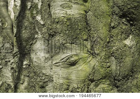 Tree bark texture. Nature wood background. Texture pattern of old figured cracked bark.
