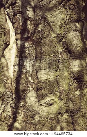Tree bark texture. Nature wood background. Texture pattern of old figured cracked bark.
