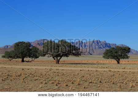 African Savanna Landscape And Sky, Namibia, South Of Africa.
