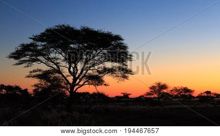 Tree Silhouette At Sunset At African Savanna Landscape. Namibia, South Of Africa.