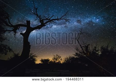 Silhouette Of Dry Tree And Milky Way. Galaxy At The Night Sky.