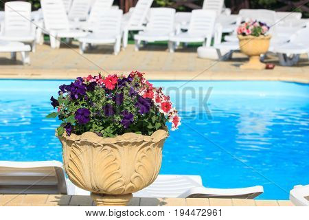 Colorful petunia flowers. Nature beautiful garden. Blue baskground