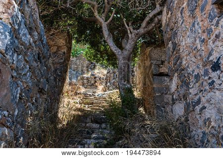 Tiny Tree On The Stairs At Spinalonga Fortress Later A Leper Colony.