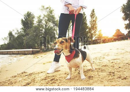 I Want To Eat. Cropped Image Of Beautiful Woman In Casual Clothing Keeping Dog On Leash While Walkin