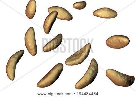 Parasitic protozoans Toxoplasma gondii which cause toxoplasmosis in tachyzoite stage isolated on white background, 3D illustration