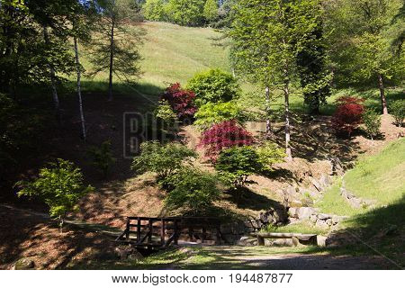 Photo of a hill characterized by green and red maples