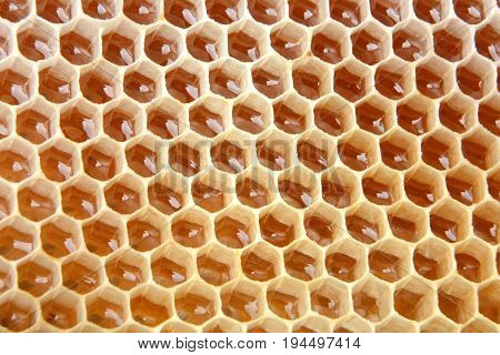 Honey cell is filled with fresh honey. Honeycomb. The product of beekeeping