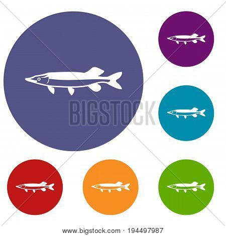 Saury icons set in flat circle reb, blue and green color for web